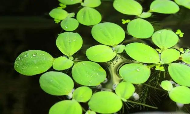 24種常見的水生植物,你那裡還能看得到么?