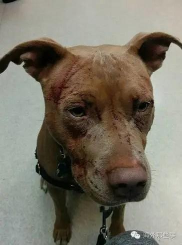 一只开了外挂的猫 把狗打进了医院
