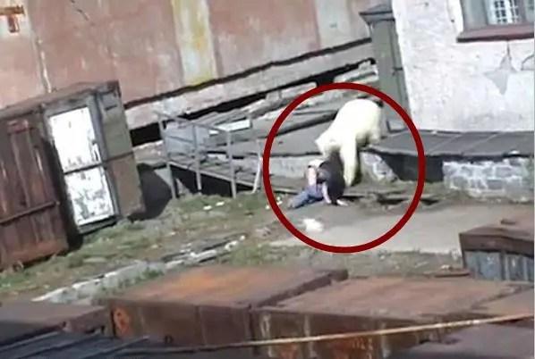 男子將自己愛犬拋向北極熊,大夥竟都為他拍手稱讚!