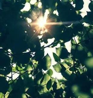 有的明明說好明日見,可醒來就是天各一方。