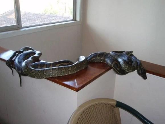 盤點澳洲的蛇,這裡對於大部分女孩子來說是地獄!