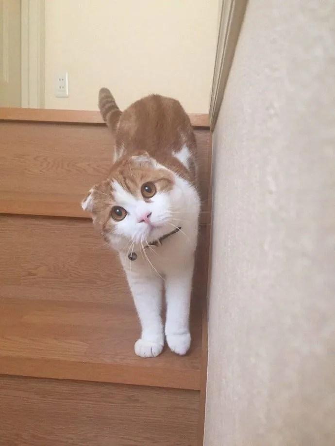 主人正在下樓梯,無意中回頭,看到這樣一幕