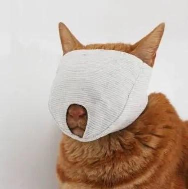 網友曬出自家的小橘豬,咦?這不是貓嗎?
