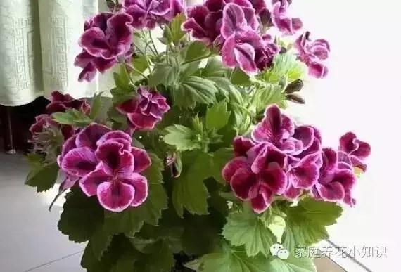 養花技巧:新手也可以養好花的「四步養花法「