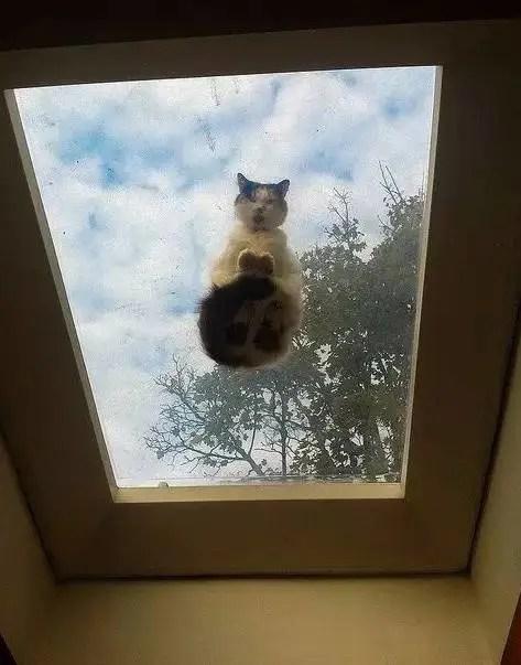 換個角度看貓咪,最後一隻都飛起來了!