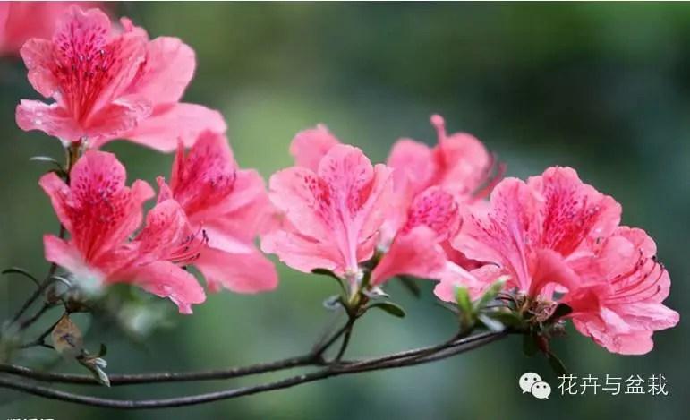 這些花不僅好看,老一輩的人們看了特別喜歡