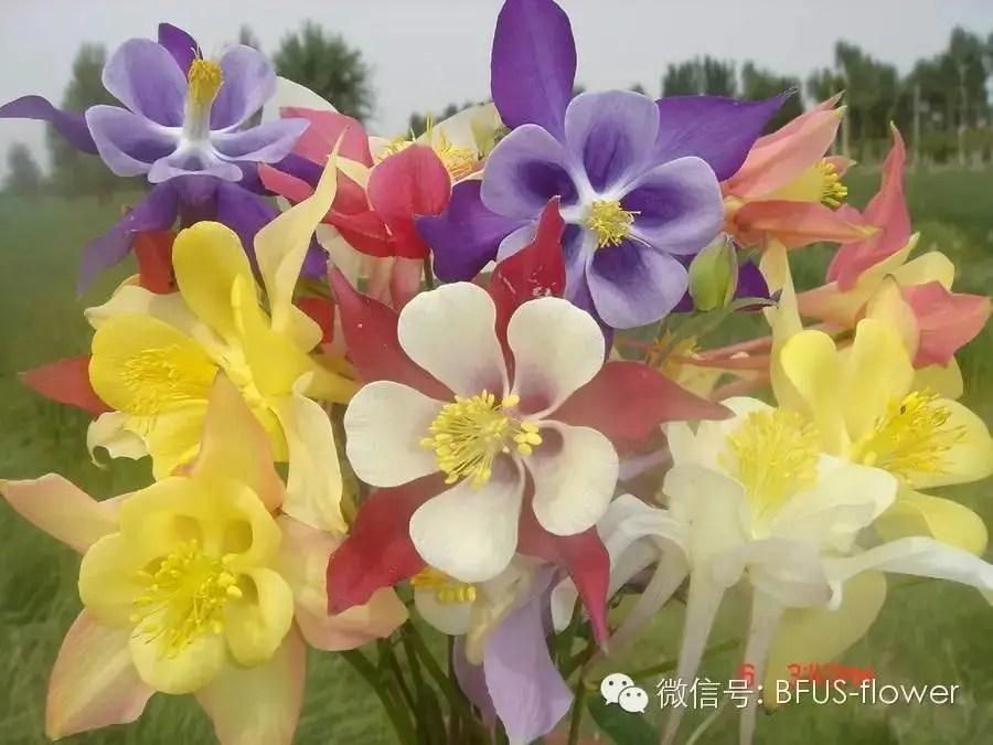 景觀宿根花卉2——4月開花品種第705期