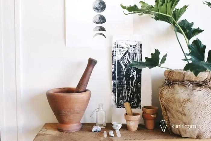 植物殺手消散-室內植物種植的要與不要 by