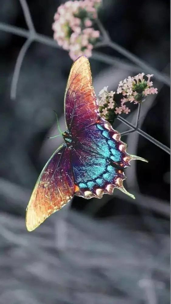 大自然是最好的造物者