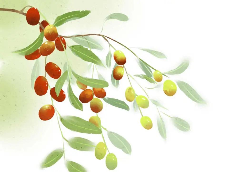 大棗這麼好吃,你可知道它的養生效果相當不錯?
