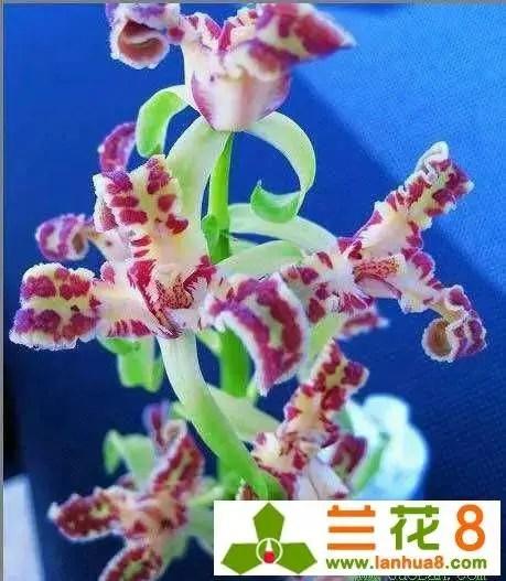 探討蘭花的種養方法有幾何?