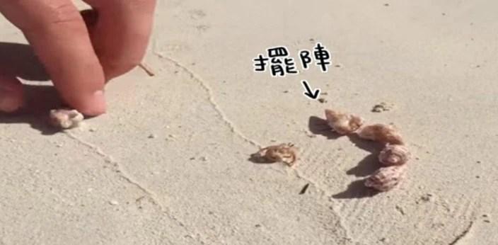 他為了一隻蟹操碎了房奴的心,幫蝌蚪找媽媽升級版