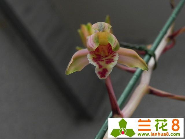 養護和管理蘭花的方法!