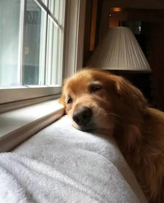 狗狗的一生很短,等你的時間卻最漫長