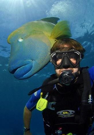 最大珊瑚魚蘇眉魚配合魔術師,「大吞活人」驚人魔術
