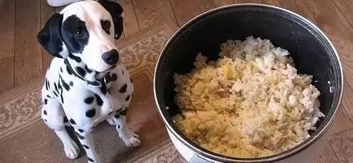 狗狗不能吃的十八種食物