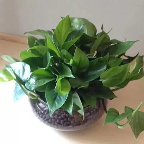 綠色植物相伴,為生活帶來環境和心靈的凈化