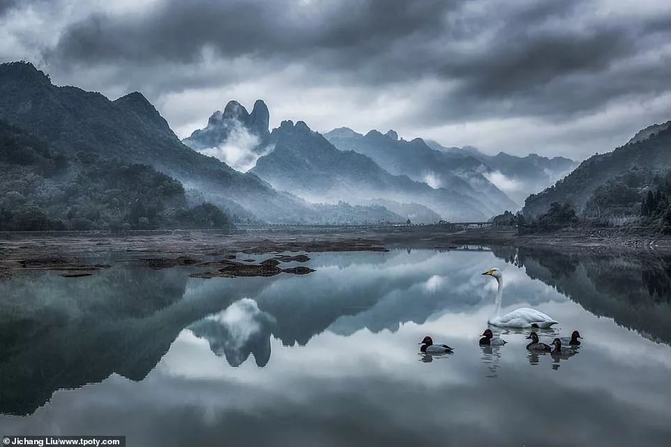 Image result for jichang liu