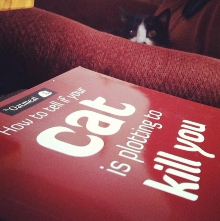 貓咪角落陰森的眼神直勾勾看你,被嚇到了嘛!