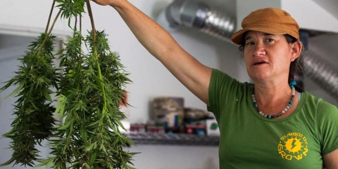 California cities create their own rules for medical marijuana