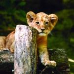 offre comité d'entreprise- magazine influence!ce- zoo de beauval offre pour les comités d'entreprises-6