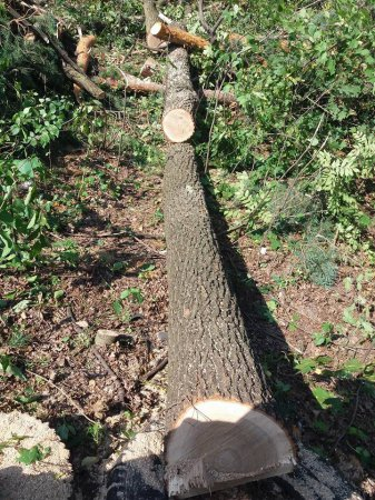 Для строительства заправки ОККО, лесорубы уничтожили Заповедное урочище Бычок