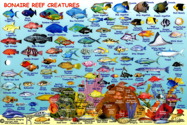 Ocean Research on Pinterest   Coral Reefs, Ocean and Fishing