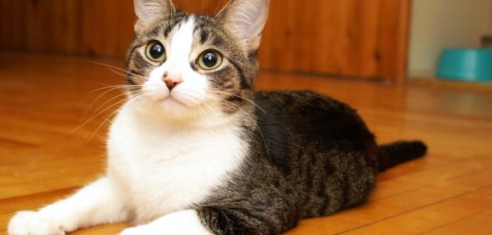 Jak často a čím krmit kočku?