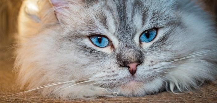 Dospělou kočku nebo malé kotě