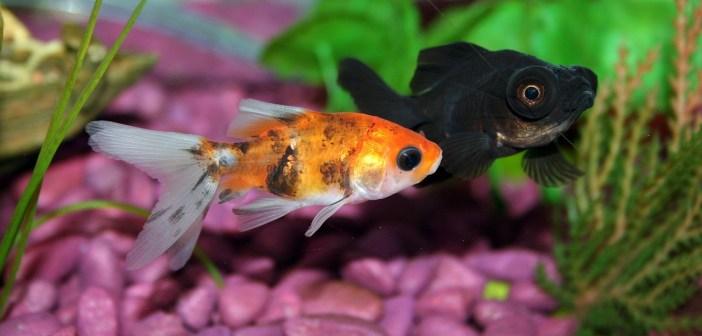 Jak vybrat správné krmivo pro  akvarijní ryby 2