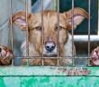 Někteří psi jsou celý svůj život v kotci nebo na řetězu