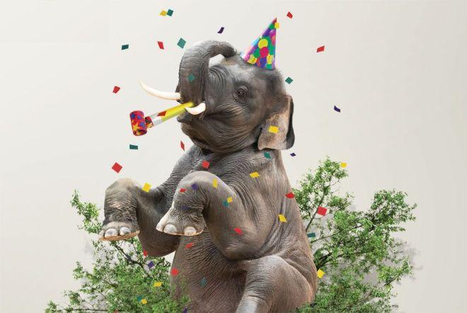 elephant_arc_en_ciel