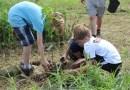 Corvée de plantation d'arbres à Grondines