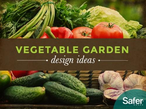Medium Of Best Vegetables For Vertical Gardening