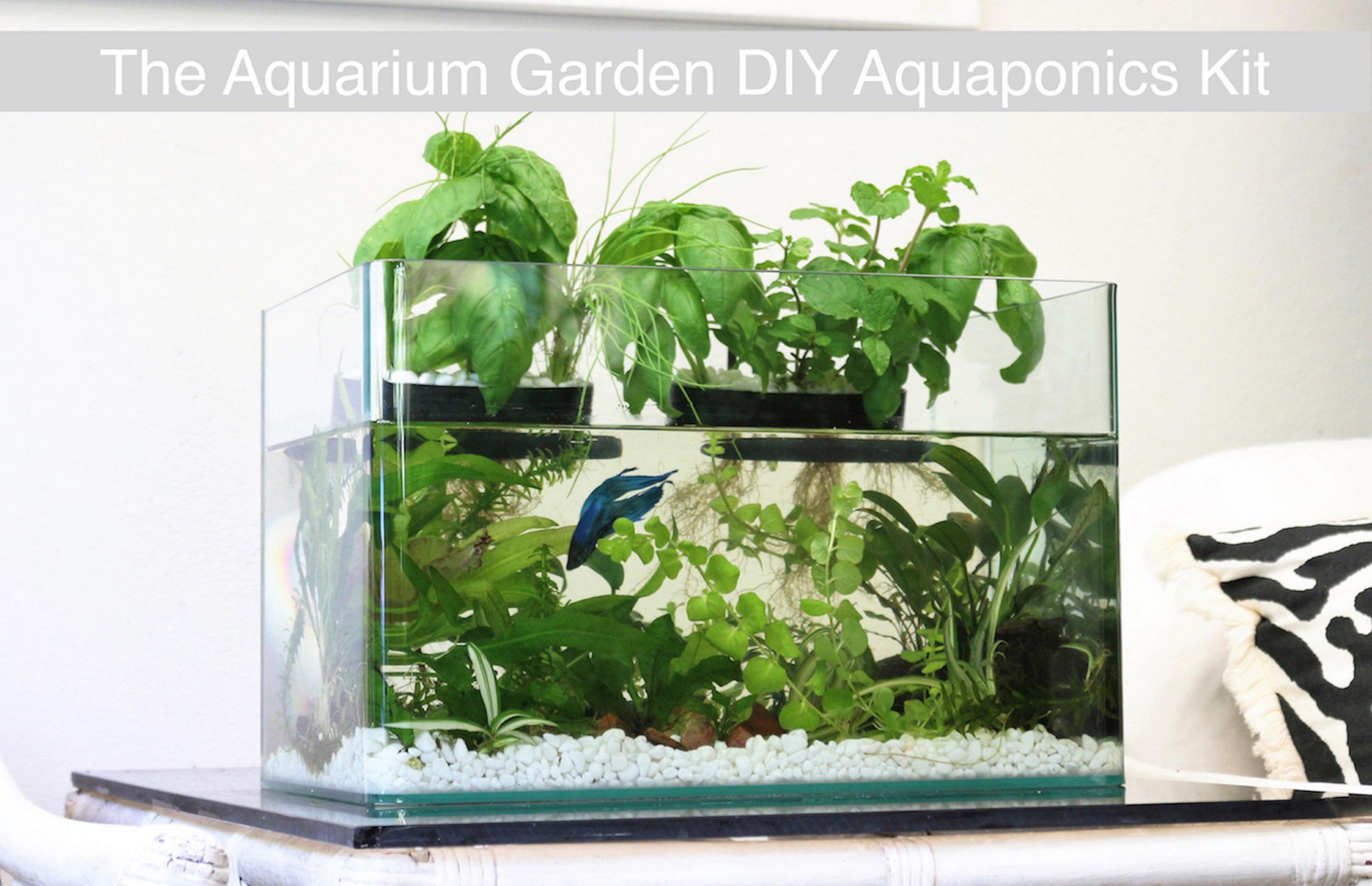 Classy Aquarium Garden Transforms Any Fish Tank Into A Lush Ecosystem Vertical Garden Inhabitat Green Architecture Vertical Gardening Kits Uk Vertical Garden Kit Home Depot garden Vertical Gardening Kit