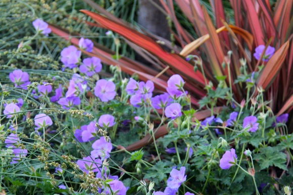 purple flowers_downtown planter