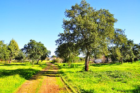 innere Ruhe finden durch einen Spaziergang