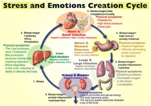 emotion_cycle