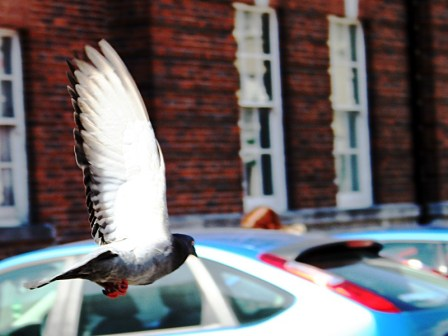 photoblog-20050614