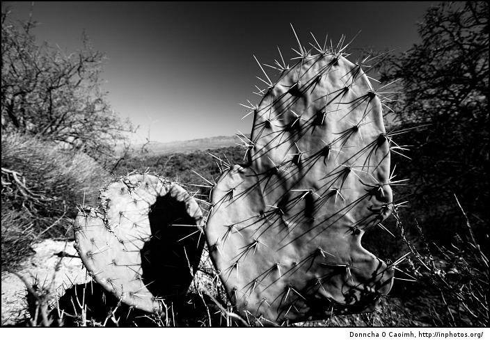 spikey-cactus