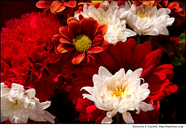 Red and White Flowers