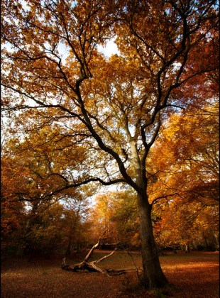 the-beauty-of-burnham-beeches