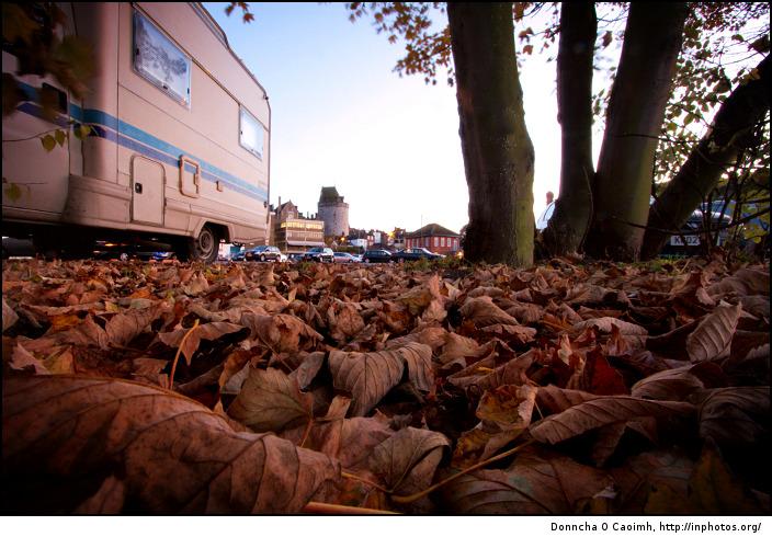 windsor-leaves