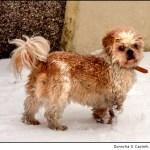 The Snow Dog