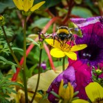 bee-on-the-flowers