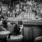 dutch-cat-in-a-pub