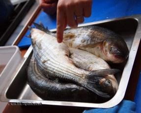Sea bass at Fish in a Day, Food Safari