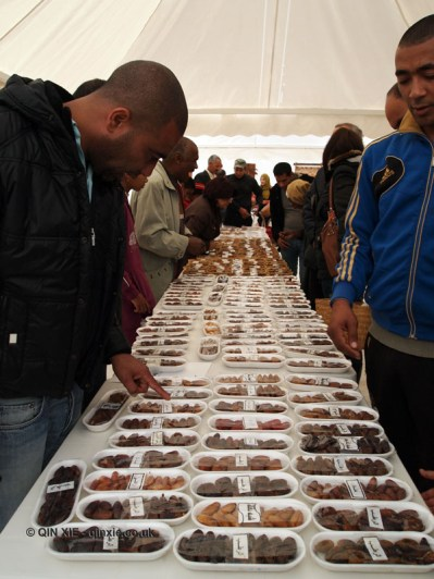 Selecting dates, Tunisia