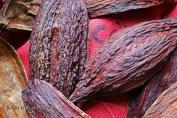 Cocoa pod shell, Diamond Chocolate Factory