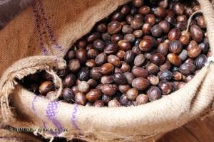 Nutmeg in bag, Gouyave nutmeg factory, Grenada